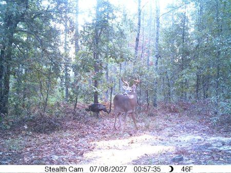 140 Acres On Angell Road : Millen : Jenkins County : Georgia
