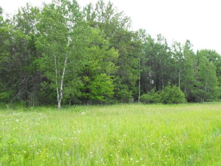50 Acres On Long Lake Rd : Cheboygan County : Michigan