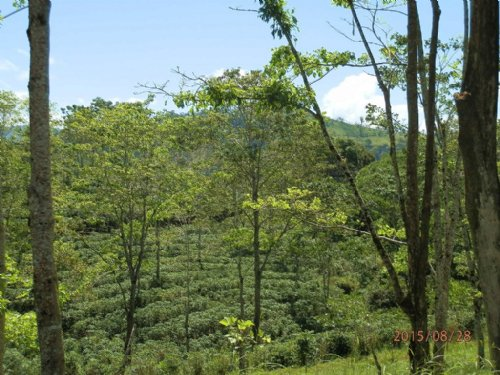 621 Ac.Coffee Finca- Reduced Price : La Suiza De Turrialba : Costa Rica