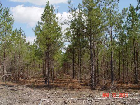 300 Acres Vredenburgh : Vredenburgh : Wilcox County : Alabama