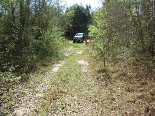 Butler County Al - 64 Acres : Greenville : Butler County : Alabama