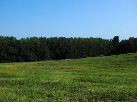 19 Acre Mini-farm, Owner Financing : Land for Sale : Boiling Springs