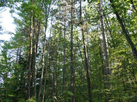 40+ Ac In Lac Du Flambeau : Lac Du Flambeau : Vilas County : Wisconsin