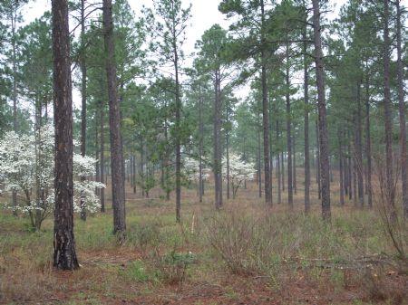 Plantation Caliber Showplace : Reynolds : Crawford County : Georgia