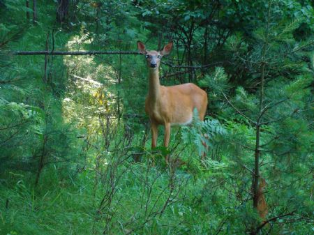 4 Ac Private & Secluded Lot : Minocqua : Oneida County : Wisconsin