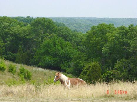 241 Acres, Fairview Ridge Rd : Carrollton : Carroll County : Kentucky