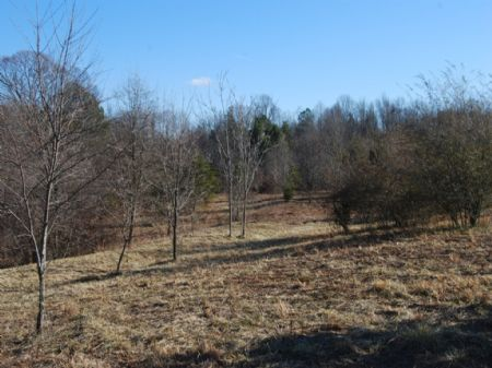 75.88 Acres Multi-use Farmland : Chesnee : Spartanburg County : South Carolina