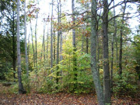 21 Acres : Spotsylvania : Spotsylvania County : Virginia