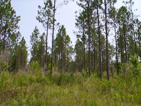 3.52 Acres : Metter : Candler County : Georgia