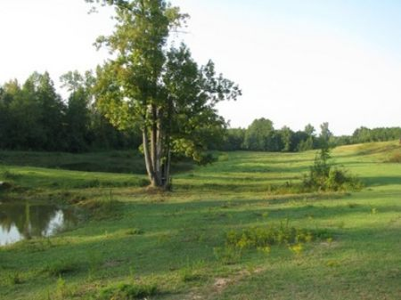 Ac244-29+/- Acres : Roanoke : Randolph County : Alabama