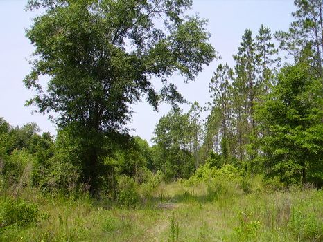 4.27 Acres : Metter : Candler County : Georgia