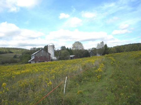 220 Acres Farm Barns Pasture Woods : Newark Valley : Tioga County : New York