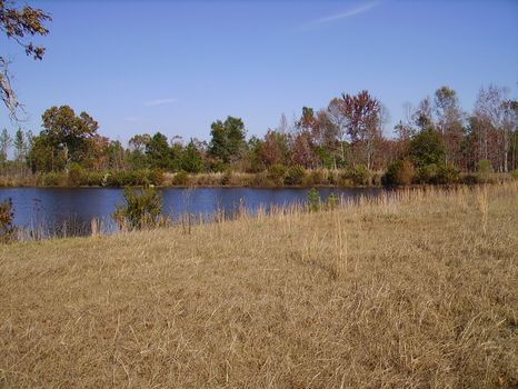 Bark Creek Plantation Phase I : Waynesboro : Burke County : Georgia