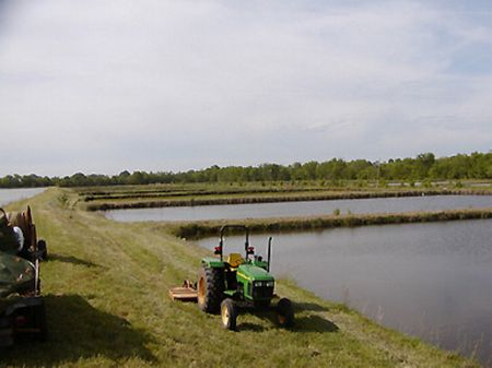 Fish Farm with Hatchery : Newbern : Hale County : Alabama