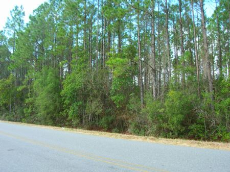 24.32 Ac West Of Starke : Starke : Bradford County : Florida