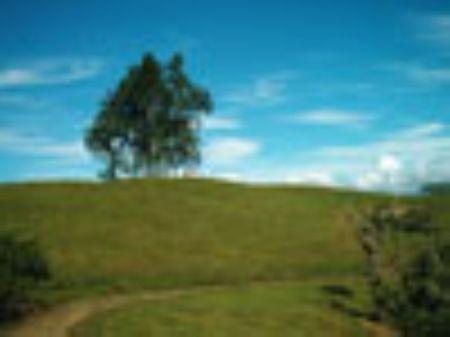 Cattle Farm-52 Hectares (128 Acres) : Turrialba : Costa Rica