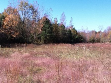 41 Acre Homesite In Ralph : Ralph : Tuscaloosa County : Alabama