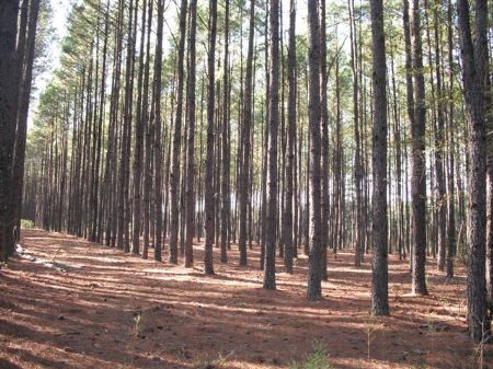 2,336 Acres Investment Grade Timber : Lumber City : Telfair County : Georgia