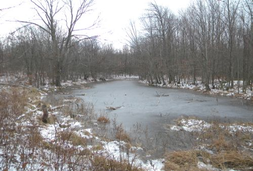 204 Acres Farmland Timber Hunting : Greenwood : Steuben County : New York