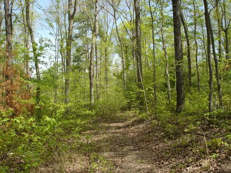 100+ Acres of Hardwood and Pine : Deer Lodge : Morgan County : Tennessee