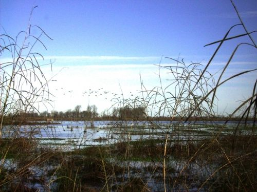 36 Acre Duck And Deer Property : Altheimer : Jefferson County : Arkansas