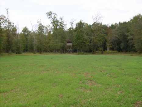 1270 Acre Hunting Preserve : Butler : Taylor County : Georgia