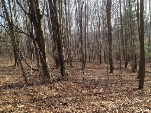 Wooded Hunting Land Close To Rt86 : Cuba : Allegany County : New York