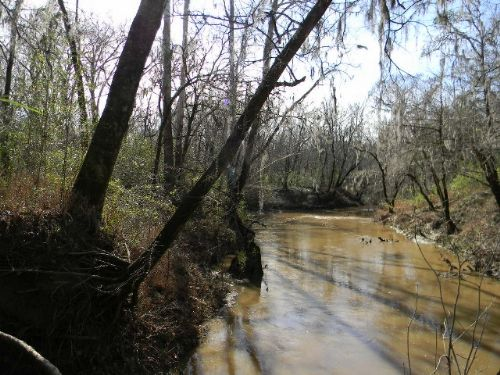 Excellent Hunting And Cattle Land : Montgomery : Alabama