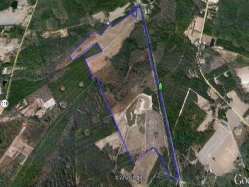 359+/- Acres Priced To Sell : Springfield : Effingham County : Georgia