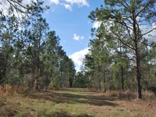 141 Acres With Pine And Creek : Screven : Wayne County : Georgia