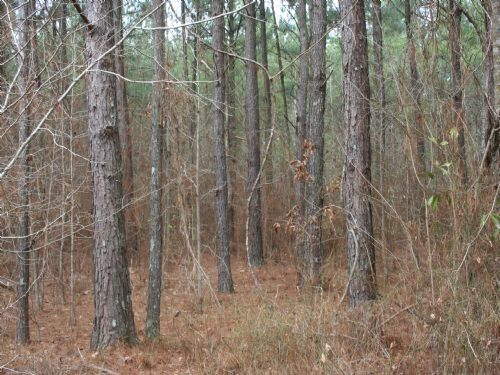 125 Acres Pines And Hardwoods : Forest : Scott County : Mississippi