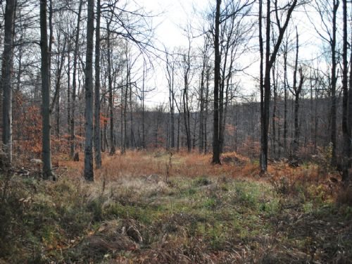 Lot 67, The Woods At Duck Harbor : Equinunk : Wayne County : Pennsylvania