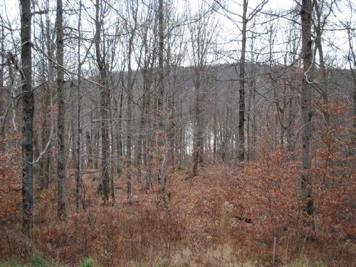 Lot 74, The Woods At Duck Harbor : Equinunk : Wayne County : Pennsylvania