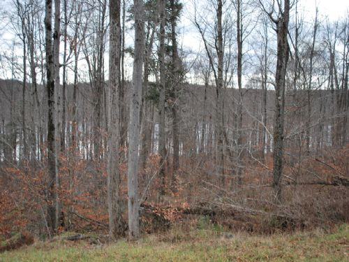 Lot 62, The Woods At Duck Harbor : Equinunk : Wayne County : Pennsylvania