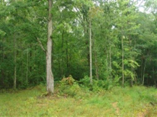 Sugartree Falls. Terms $500/month : Waynesboro : Wayne County : Tennessee