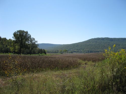 3970 Acres Of Income Producing Land : South Pittsburg : Marion County : Tennessee