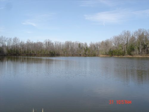 Excellent Farm Land Tract : Deer Lodge : Morgan County : Tennessee