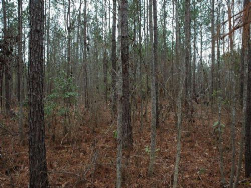 88 Acre Timber Investment Property : Rowland : Robeson County : North Carolina