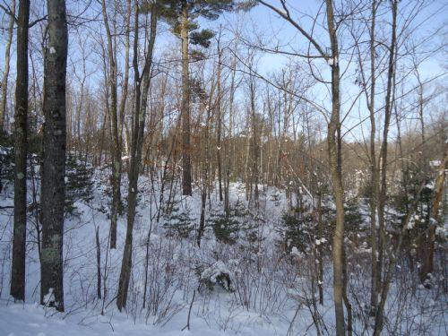 Hixon Road - Memories In The Making : Minocqua : Oneida County : Wisconsin