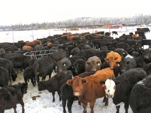Expired Alaska Cattle Amp Elk Farm Land For Sale Delta