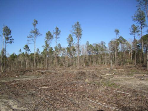 Wood Junction (0279) : Eros : Jackson Parish : Louisiana