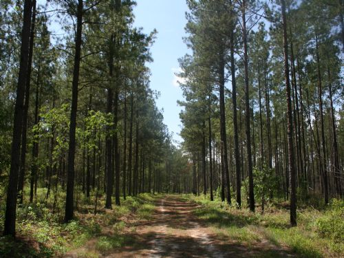 Dukes Farm - Timberland Investment : Sandersville : Washington County : Georgia