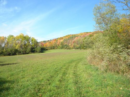 22 Acres Farmland Woodland : Dix : Schuyler County : New York