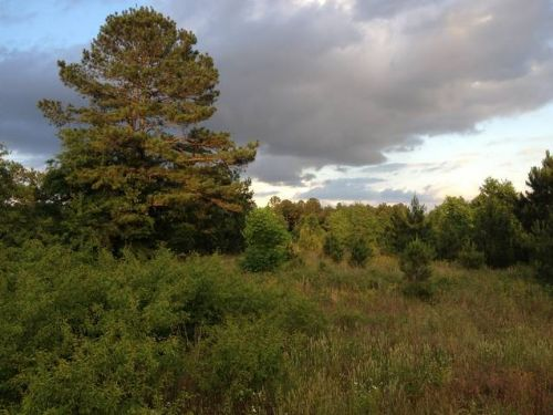 Cheap Minifarm : Wedgefield : Sumter County : South Carolina