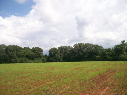 42 +/- Acres, Fenced On 3 Sides : Troy : Pike County : Alabama