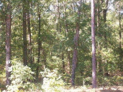 31 +/- Acres : Goshen : Pike County : Alabama