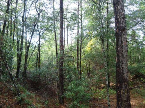 168.7 +/- Acres : Troy : Pike County : Alabama