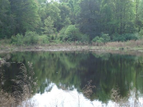 27.5 +/- Acres In Jack, Al : Jack : Coffee County : Alabama