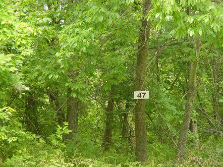 Lot 47 Fox Trail Wildwood Acre Sub : Owenton : Owen County : Kentucky