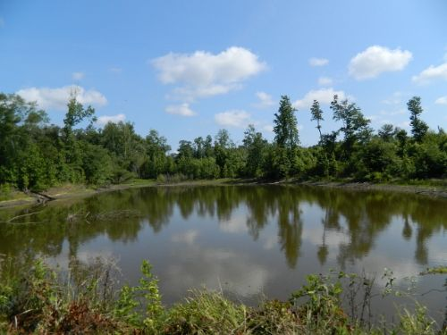45.35 Ac Mini Farm/ House & Pond : Carlton : Madison County : Georgia